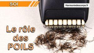 Le rôle des poils – Ont-ils encore une fonction ?