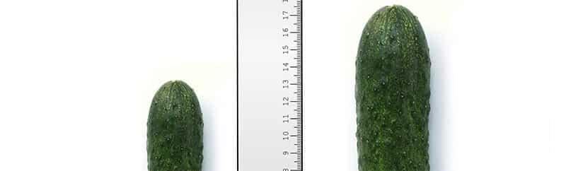 comparaison taille du pénis