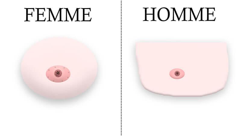 sein en dessin d'un homme et d'une femme